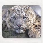 Vishnu Snow Leopard Mousemat