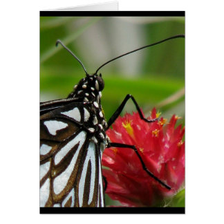 vistas ~ 2009 butterfly series ~ blank note card