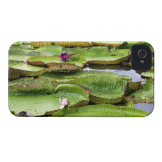 Vitoria Regis, giant water lilies in the Amazon Case-Mate iPhone 4 Cases