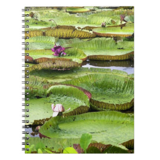 Vitoria Regis, giant water lilies in the Amazon Spiral Notebook