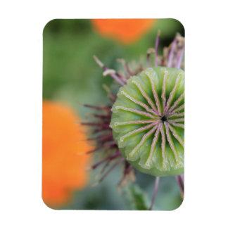 """Vivid """"Blooming 13"""" Orange and Green Flower Rectangular Photo Magnet"""