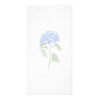 Vivid Blue Hydrangea Photo Cards
