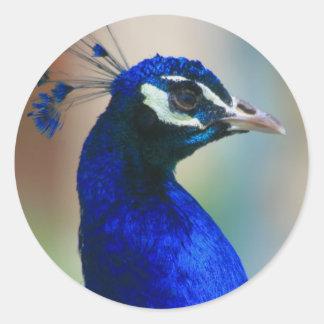 vivid blue peacock round sticker
