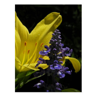 Vivid Daylily Salvia Floral Postcard