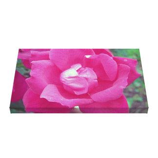 Vivid Hot Pink Rose Photo Stretched Canvas Art Canvas Print