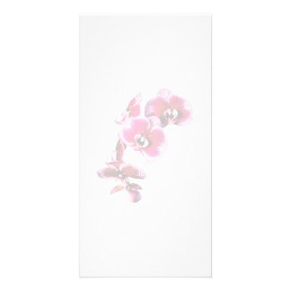 Vivid Maroon Phalaenopsis Orchids Personalized Photo Card