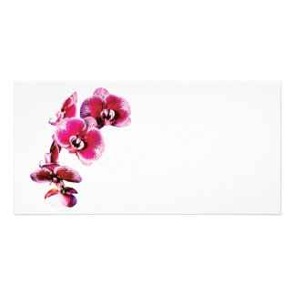 Vivid Maroon Phalaenopsis Orchids Picture Card