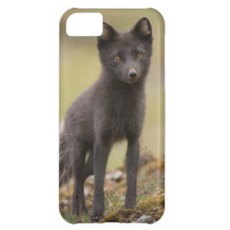 Vixen searches for food iPhone 5C case