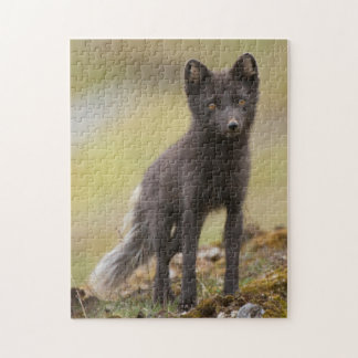 Vixen searches for food jigsaw puzzle