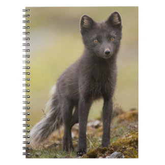 Vixen searches for food spiral notebook
