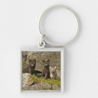 Vixen with kits outside their den key ring