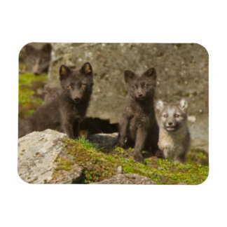Vixen with kits outside their den magnet