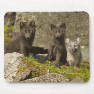 Vixen with kits outside their den mouse pad