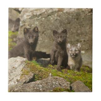 Vixen with kits outside their den tile