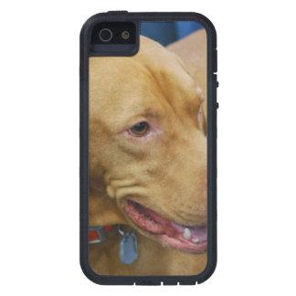 Vizla Dog iPhone 5 Case