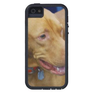 Vizla Dog iPhone 5 Covers