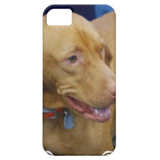 vizsla-4.jpg iPhone 5 case