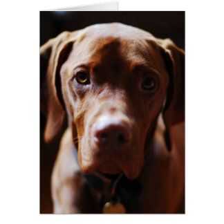 Vizsla - And they call it puppy love Card