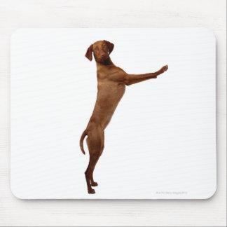 Vizsla Dog Mouse Mat