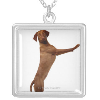 Vizsla Dog Silver Plated Necklace