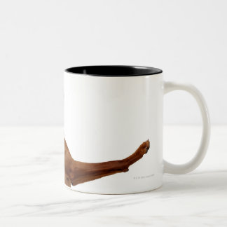 Vizsla Dog Two-Tone Coffee Mug
