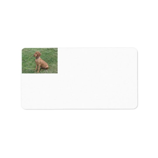 Vizsla Puppy Address Labels