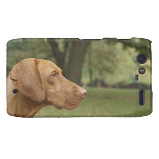 Vizsla Puppy Motorola Droid RAZR Case
