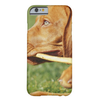 Vizsla puppy in park with stick in mouth, barely there iPhone 6 case