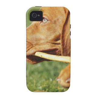 Vizsla puppy in park with stick in mouth, Case-Mate iPhone 4 cases