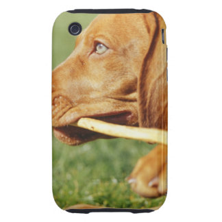 Vizsla puppy in park with stick in mouth, iPhone 3 tough cover