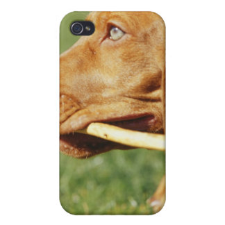 Vizsla puppy in park with stick in mouth, iPhone 4/4S case