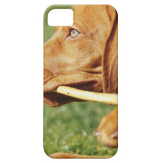 Vizsla puppy in park with stick in mouth, iPhone 5 cover