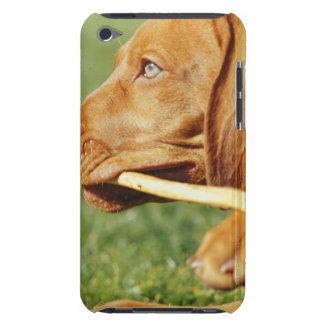 Vizsla puppy in park with stick in mouth, iPod touch cases