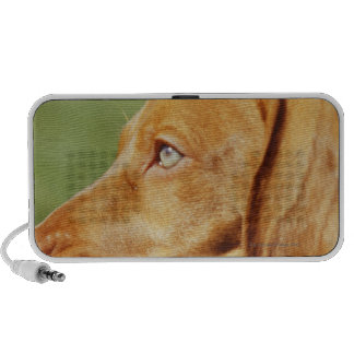 Vizsla puppy in park with stick in mouth, laptop speakers