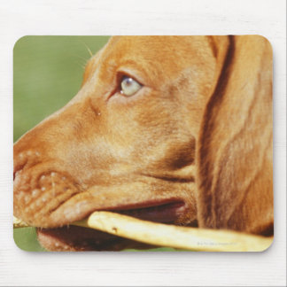 Vizsla puppy in park with stick in mouth, mouse mat