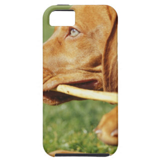 Vizsla puppy in park with stick in mouth, tough iPhone 5 case