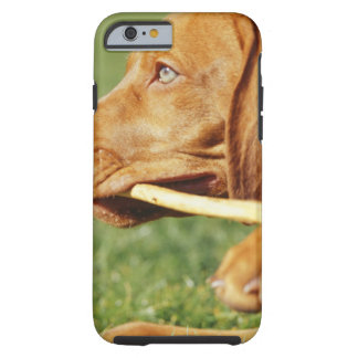 Vizsla puppy in park with stick in mouth, tough iPhone 6 case