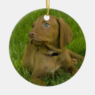 Vizsla puppy Ornament