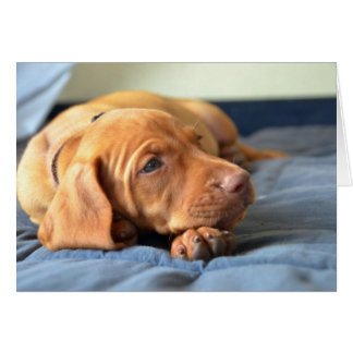 Vizsla Puppy Resting On Its Paw Greeting Card