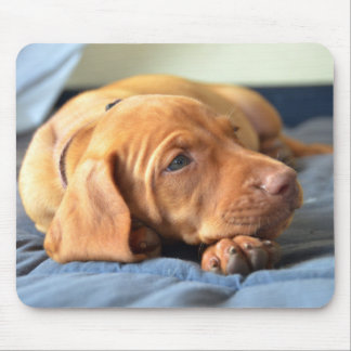 Vizsla Puppy Resting On Its Paw Mouse Mat
