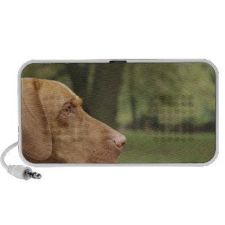 Vizsla Puppy Speaker System
