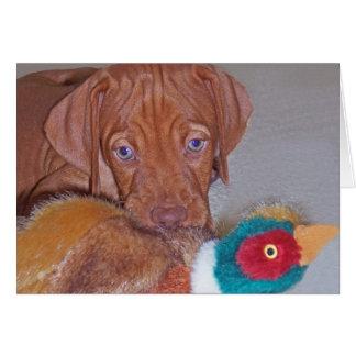 Vizsla Puppy with Pheasant Greeting Card (photo)