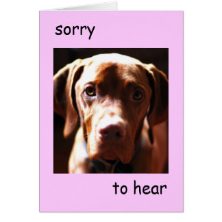 Vizsla - sorry to hear you re pawly pink card