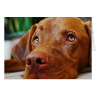 Vizsla - Thinking of you Card