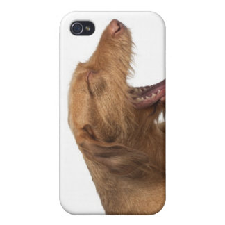 Vizsla yawning in front of white back ground iPhone 4 cover