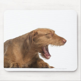Vizsla yawning in front of white back ground mouse pad