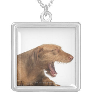 Vizsla yawning in front of white back ground silver plated necklace