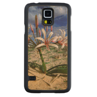 Vlei Lily (Nerine Laticoma) In Flower Carved Maple Galaxy S5 Case