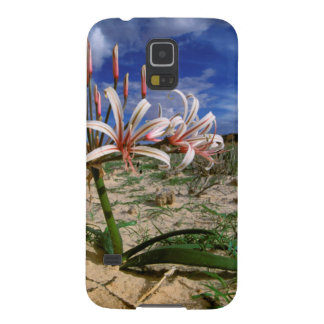 Vlei Lily (Nerine Laticoma) In Flower Galaxy S5 Covers