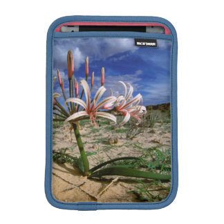Vlei Lily (Nerine Laticoma) In Flower iPad Mini Sleeve